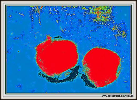 Rote Früchte Detail b
